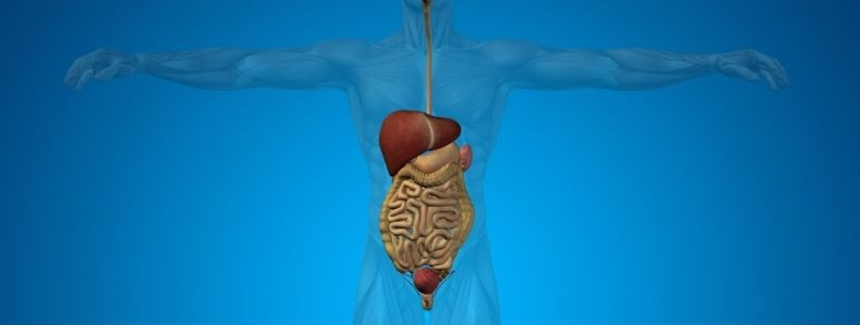 Reasons You Might Need a Gastroenterologist